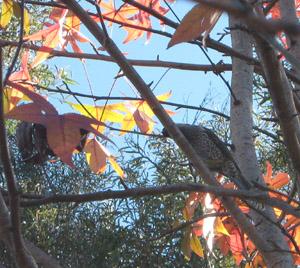 treehopper.jpg